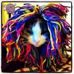 Crochet Cat Wigs - Dearest Debi Patterns