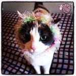 Crochet Kitty Cat Wigs