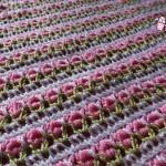 Tunisian Roses Afghan - Dearest Debi Patterns